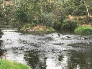 Warrandyte_Yarra River | Paint-Out PSVA